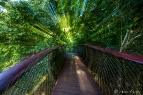 Cape Town's Boomslang Aerial Tree Canopy Walkway Opens