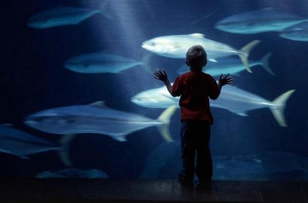 Two Oceans Aquarium, WAZA,