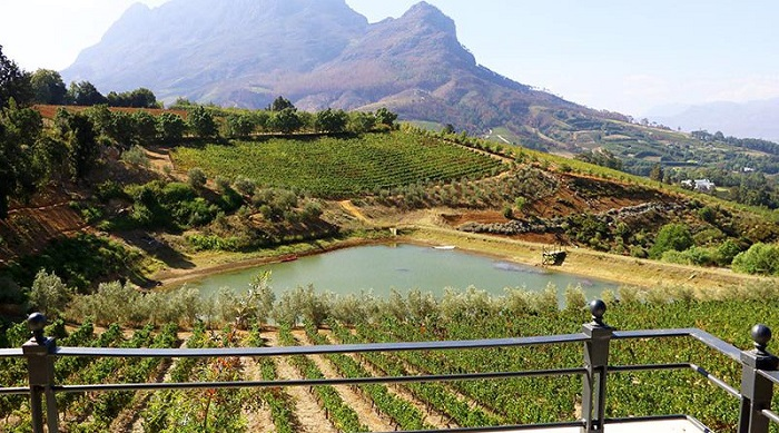 Travel the Green Wine Route
