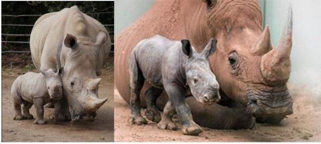 World Rhino Day – Join the Rhino Trail Hike