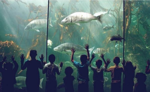 Summer Holidays, Two Oceans Aquarium