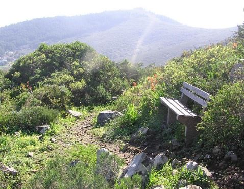 World Environmental Education Day a reminder of Cape Town's vast biodiversity