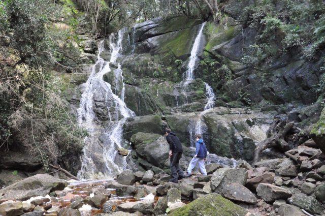 Kirstenbosch FREE Entry