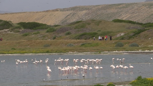 Virtual Birdathon at False Bay Nature Reserve