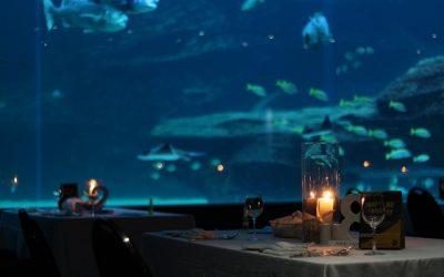 "Deep Blue Dinners ""underwater restaurant"""