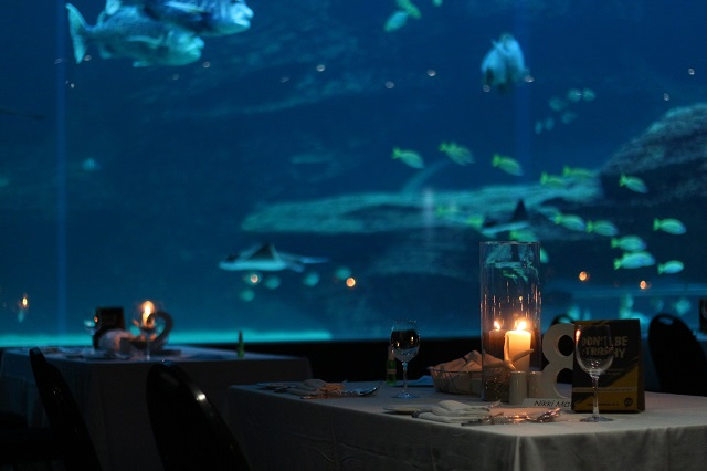 Deep Blue Dinner at Two Oceans Aquarium